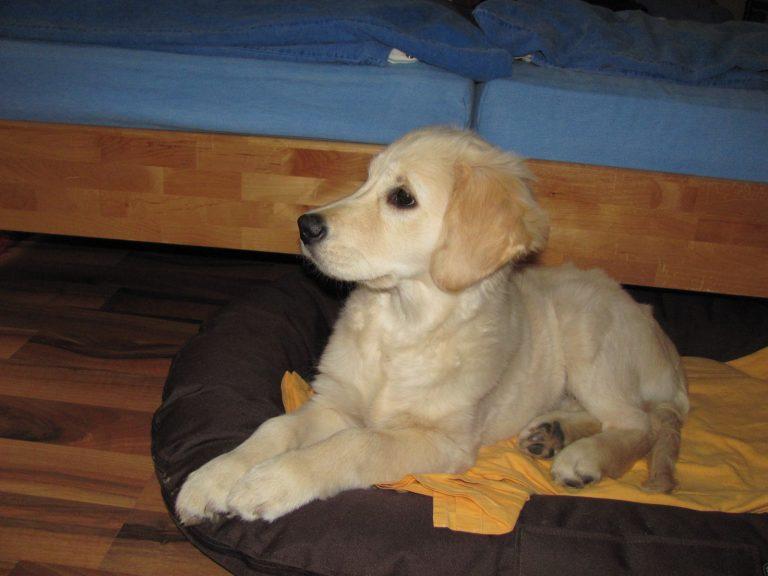 Gina 12 Wochen alt